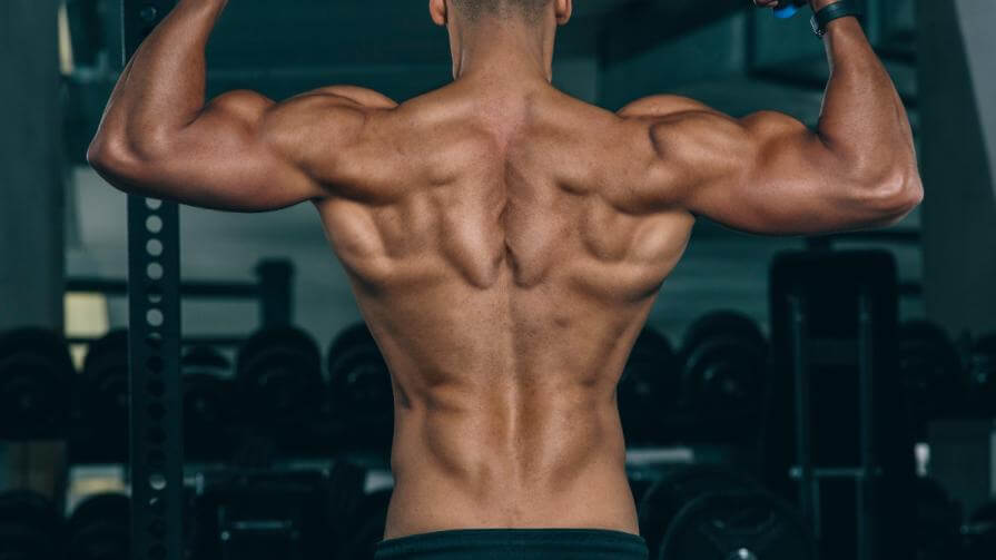 What You Ought To Know About Muscle Building 8